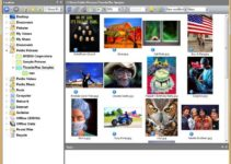 ThumbsPlus Pro v10 SP2 Free Download